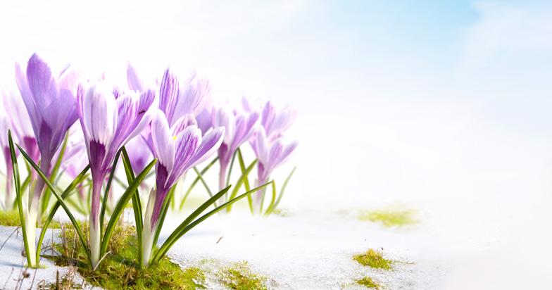 spring_nasaprica_onama