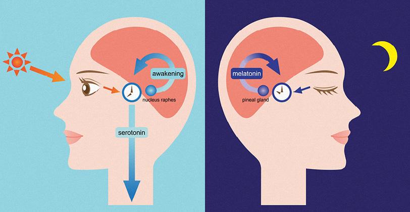 Činjenice o melatoninu